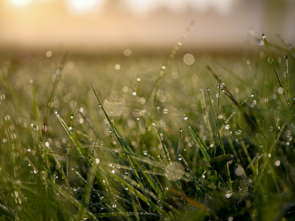 Dew on grass with sunlight in background