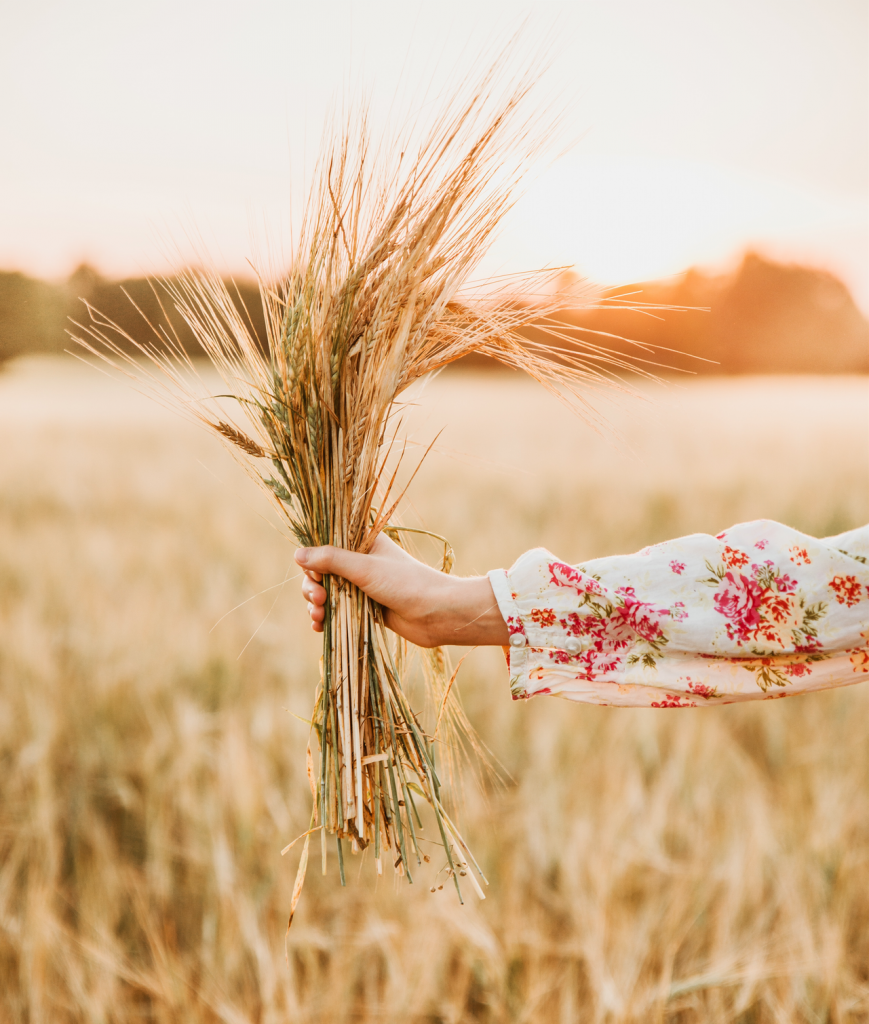 hand and arm wearing a pink and white floral blouse handing a bouquet of wheat in a field with sunlight