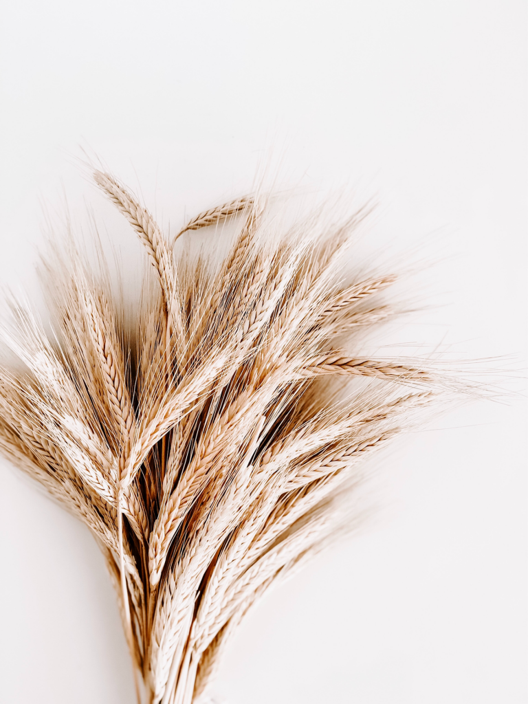 wheat bouquet on white background