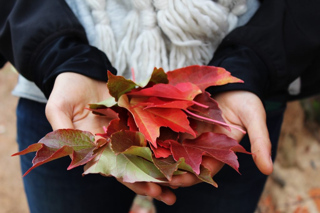 Close up of person holding out fall leaves