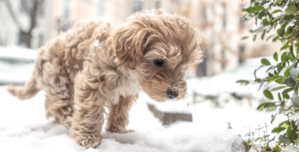 Small puppy looking at the snow