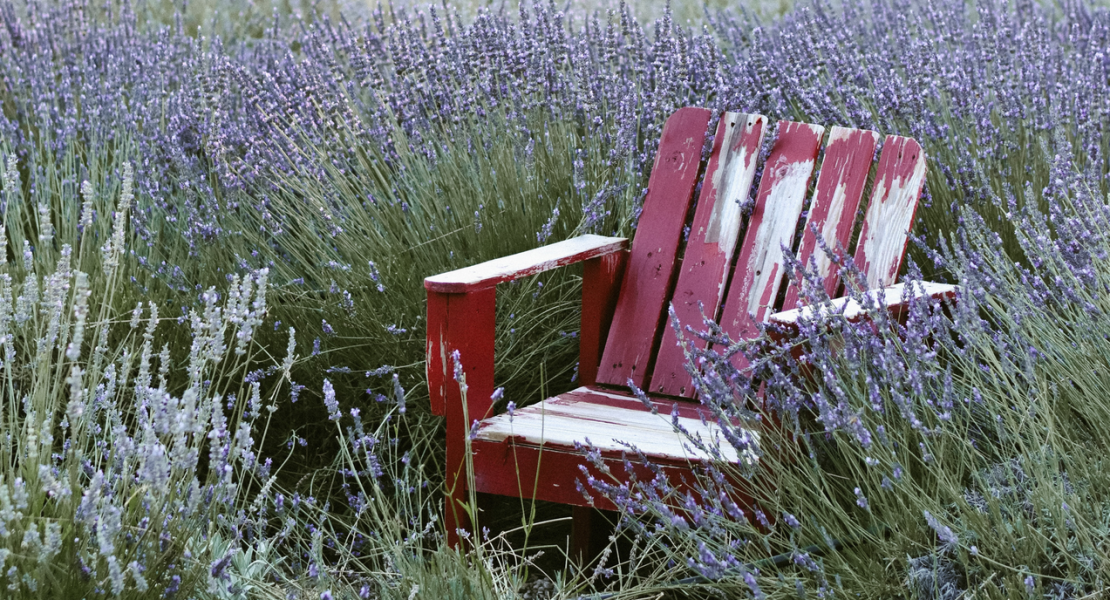 Red wood lawn chair in field of lavender