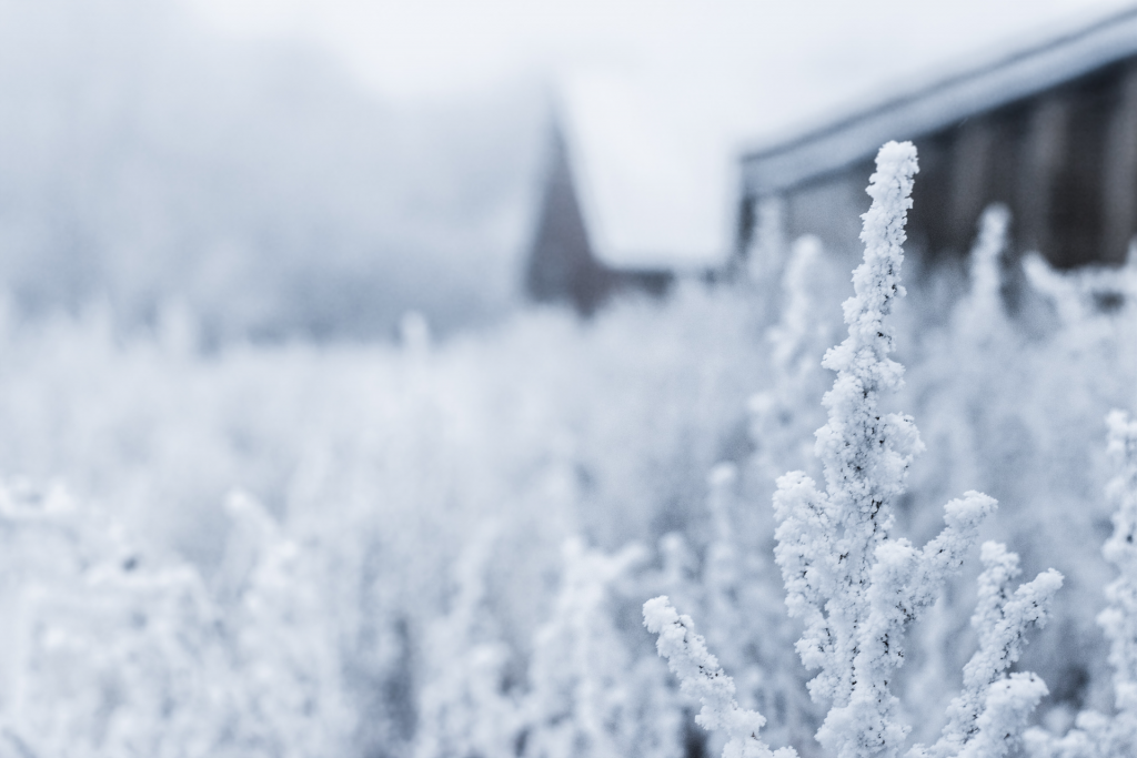 Close up image of snow covered brush with house in background