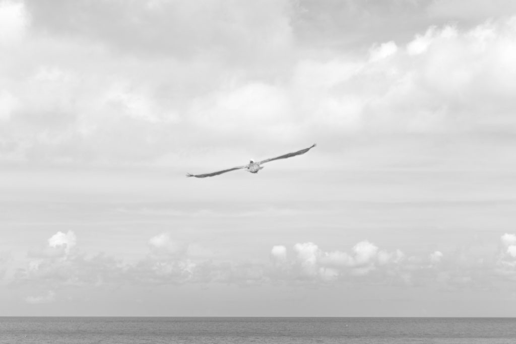 Black and white of seagull's wingspan over ocean