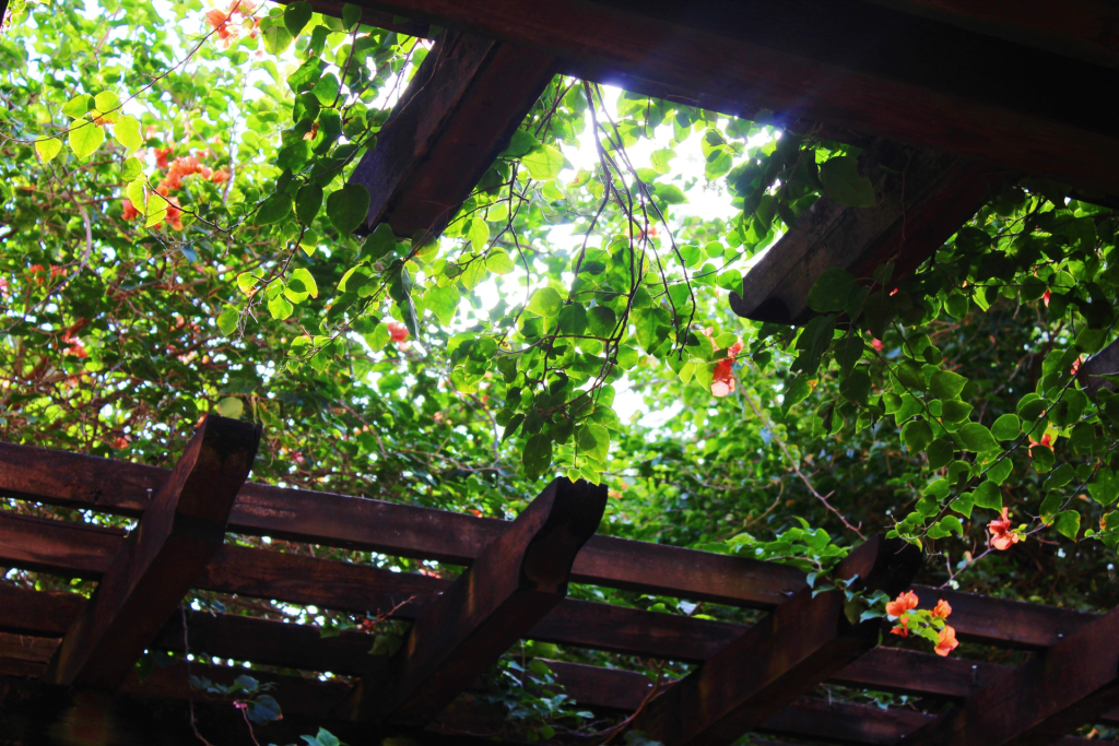 Pergola  opening up to sky and light with flowering vine