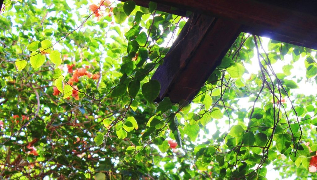 Pergola with flowering vine, sunlight streaming through