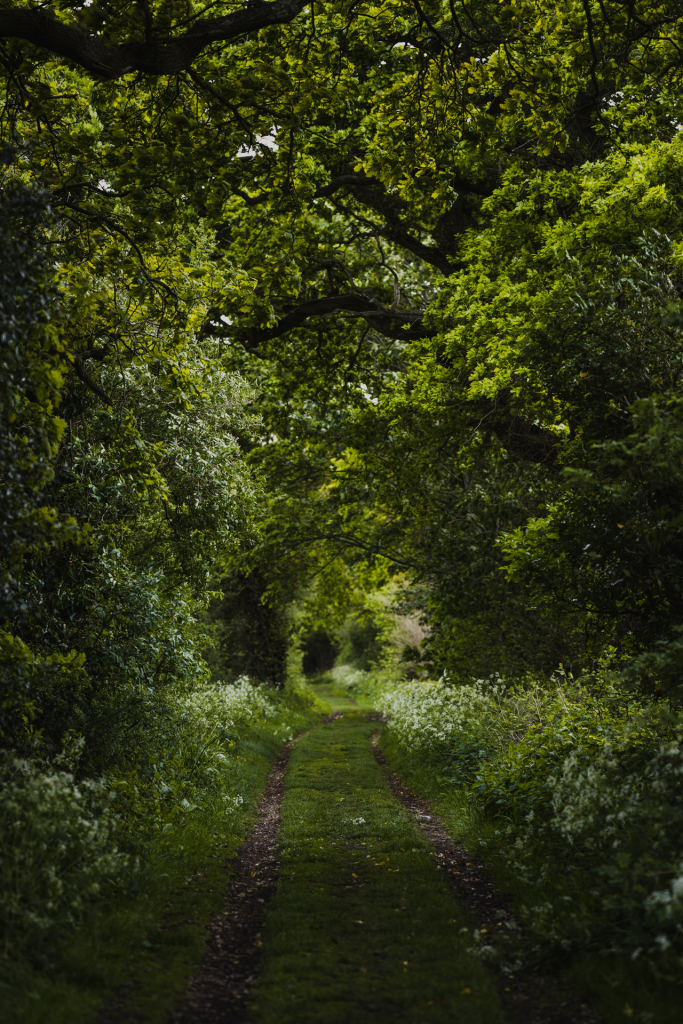 Darkened green woods with narrowed path