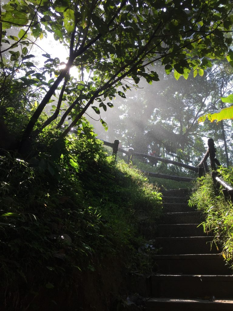 Sunlight streaming through green woods with stairs