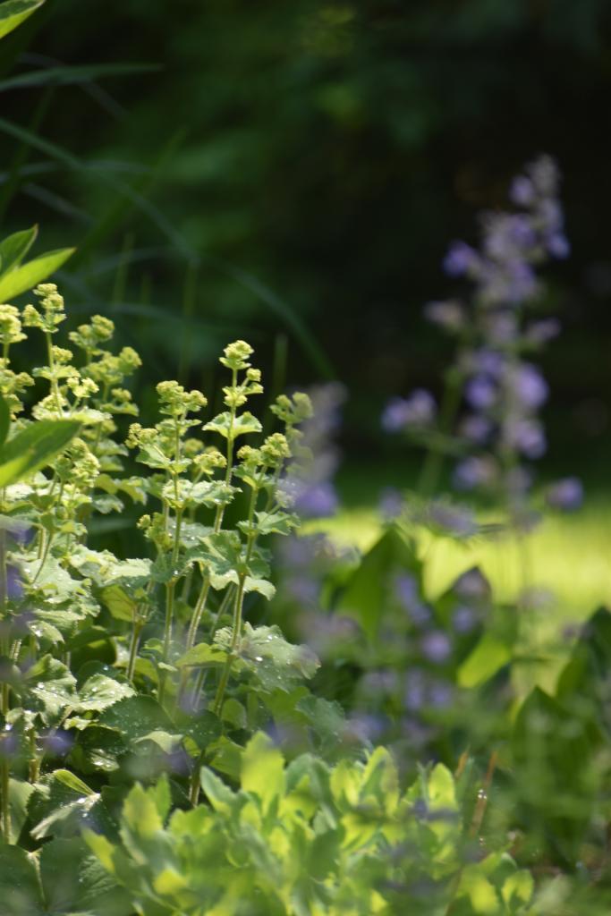 Close up of perennial garden